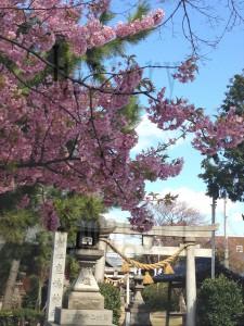 鹿島町の名前の由来となった「鹿島神社」。いま、参道にはきれいな梅の花が咲いています。