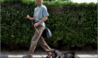 犬の散歩風景