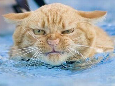 swimming_cat